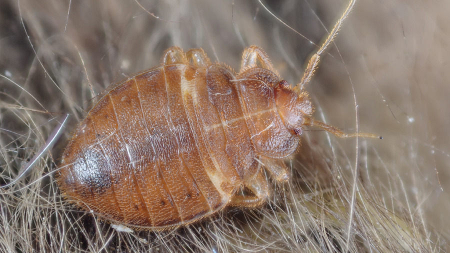 Finding and Preventing Bed Bugs